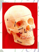 Comprar Productos Cráneo-Maxilo-Facial