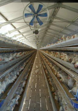 Buy Equipment for growing of poultry