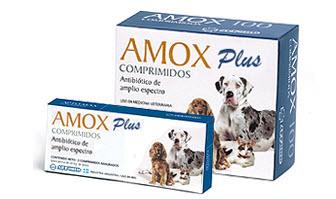Antibiótico Amox Plus