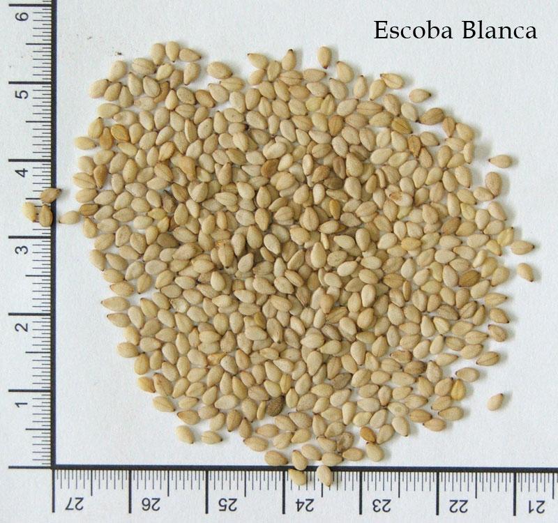 Comprar Sesame seeds