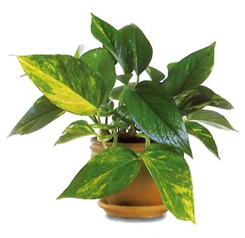 Comprar Plantas de interiores