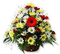 Arreglo Floral Con Gerberas Y Margaritas Comprar En