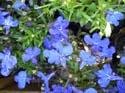 Comprar Plantas de interior y exterior M17