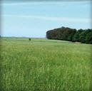 Rye Grass Perenne Nui