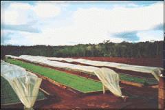 Materias Primas para Industria del Tabaco