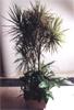 Conjunto de Plantas Naturales