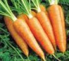 Zanahoria Cubito Bolsa x 10kg