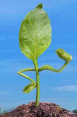 Agro fertilización