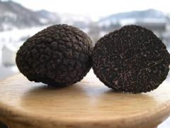 Trufas Negras - en Reale productos Gourmet,
