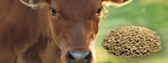 Protein concentrates for feeding