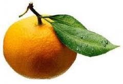 Naranja Exportación