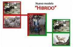 Keçiler ve koyunlar için sağma makineleri