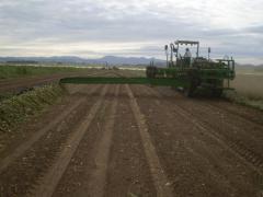 Cosechadoras de Cebollas a Pilas MA 5500
