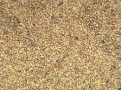 Semillas de Alfafa