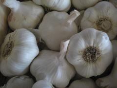 Ajo blanco de semilla china