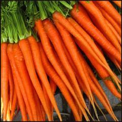 Zanahoria tipo Nantesas