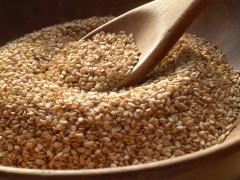 Semillas para consumo certificadas orgánicas