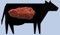 Riñón de vaca