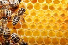 Honey - Miel