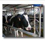 Tuberías para bebederos para ganado