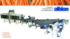 Línea para Lavado y Selección de Zanahorias