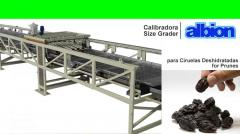 Calibradora para Ciruelas Deshidratadas