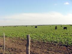 Campo Ganadero En La Pampa - Argentina