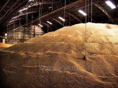VENTA DE SOJA GMO- NO GMO