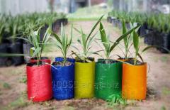 Bolsas de Cultivo Bicolor