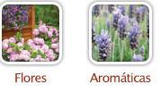 Semillas de Flores y Hortalizas: Vicia Faba