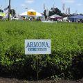 Semillas de Alfalfa Armona