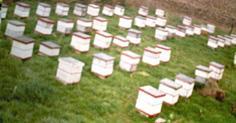 Cormenas de abejas