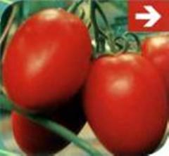 Semillas Tomate Pera Colibrí F1