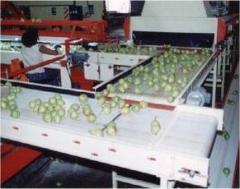 Cinta Transportadora de Fruta
