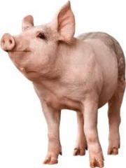 Carne Porcina