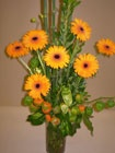 Presente Floral con Gerberas y Pisalis