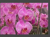 Plantas de interior deciduas ornamentales