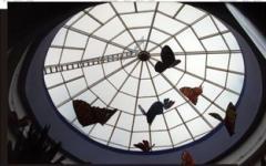 Cubiertas de vidrios