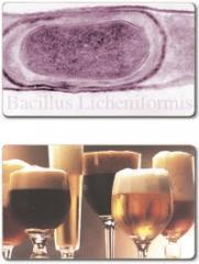 Enzima para la Transformacion de Cerveza Endozym