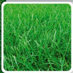 Alfombras Verdes