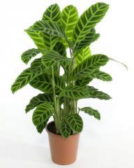 Planta 2K