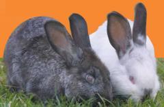 Alimentos para Conejos