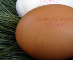 Huevo № 2 Grandes
