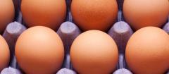 Enterprises poultry keeping