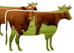 Livestock products