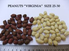 Cacahuete / maní / peanuts Virginia / Jumbo de