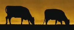 Aditivos para la alimentación de animales de granja