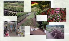 Variedad de Plantas