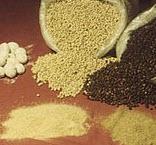 Pimienta Especies