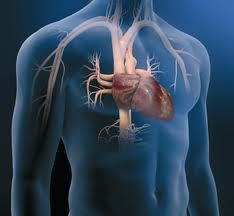 Productos de Cardiología